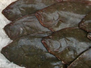 Fresh Fluke (summer flounder)