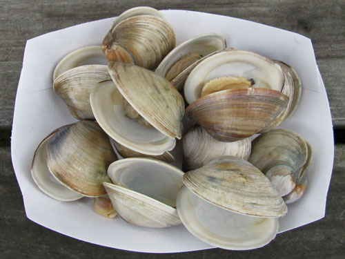 Steamed Littleneck Clams