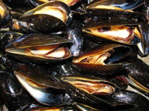 cooked blue mussels