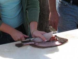 filleting-flounder-top3