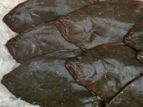 Fresh Fluke (flounder)