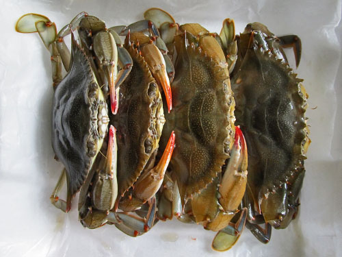Soft Shelled Crabs