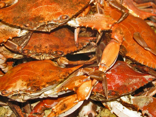 Steamed Chesapeake Bay Crabs